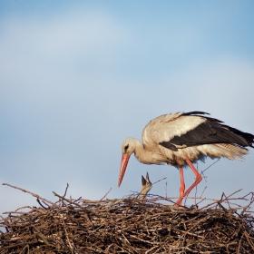 The Stork's Nest