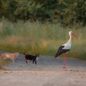 Stork's security