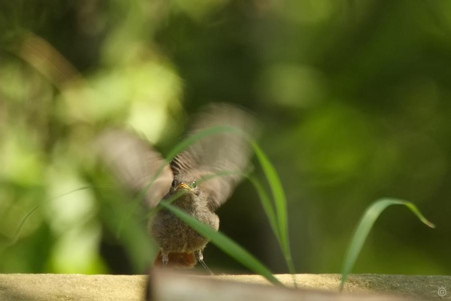 Kopciuszek macha skrzydełkami