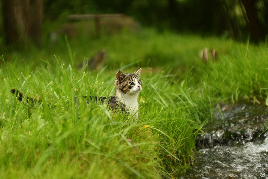 Kotek przed strumyczkiem