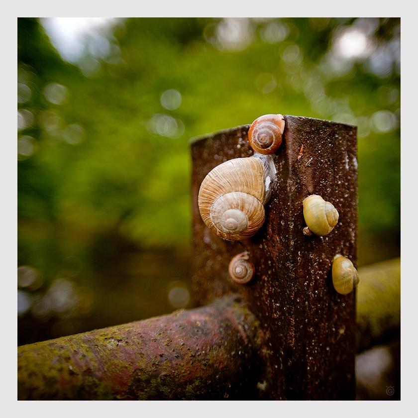 Ślimaki-Spiralki