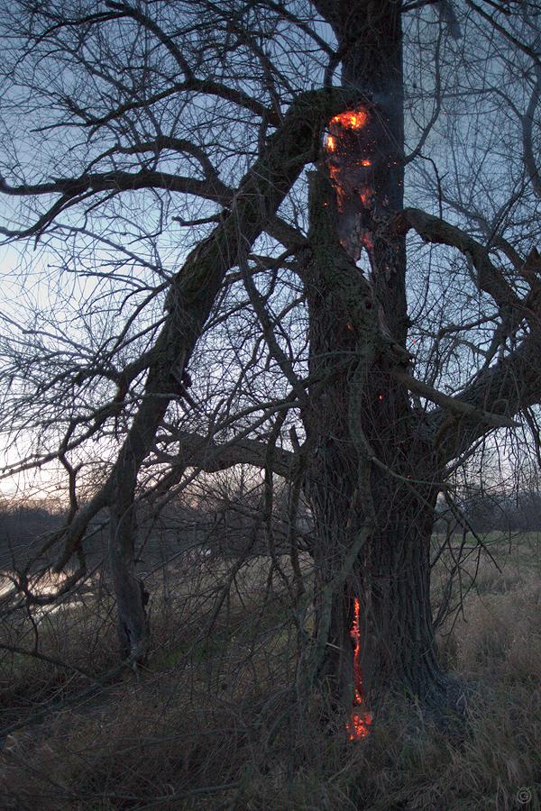 Drzewo w ogniu