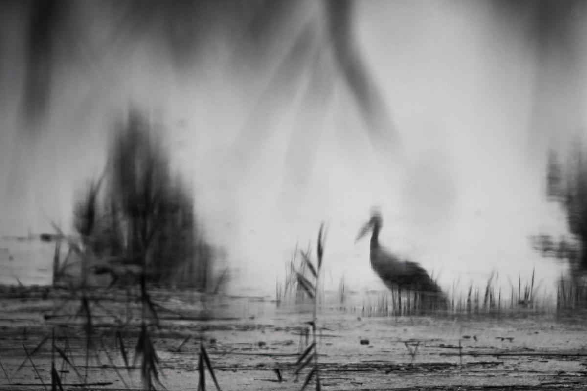 Refleksyjny bocian by Wojciech Grzanka