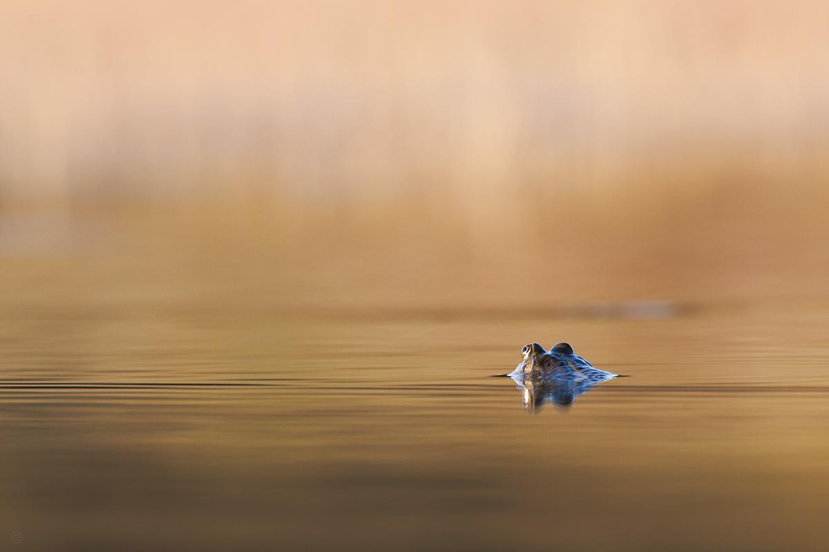 O czym duma kuma by Wojciech Grzanka