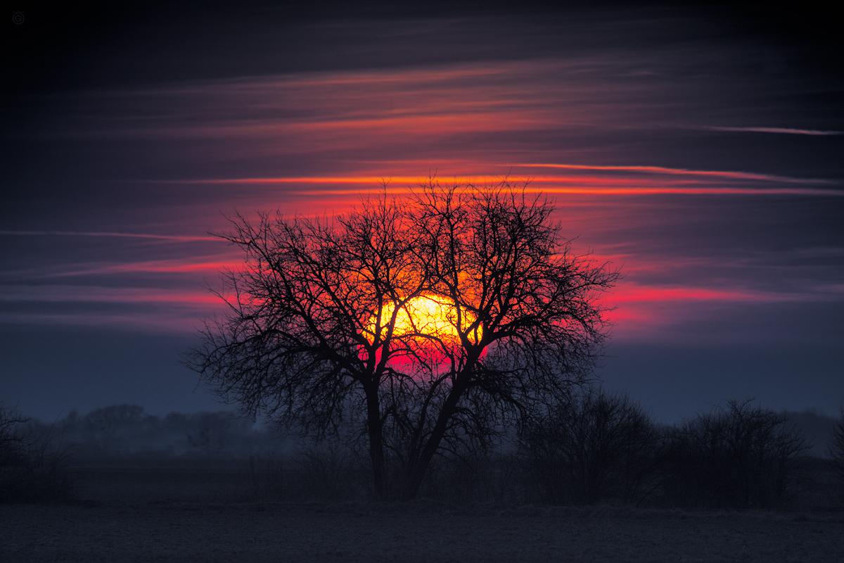 Słoneczne drzewo by Wojciech Grzanka
