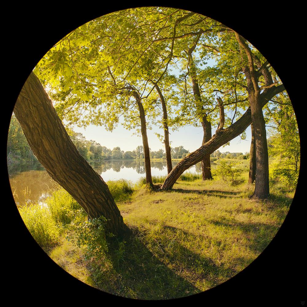 Pod drzewami