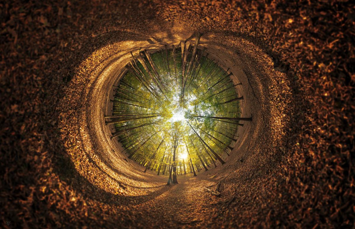 Oko jesieni by Wojciech Gzanka