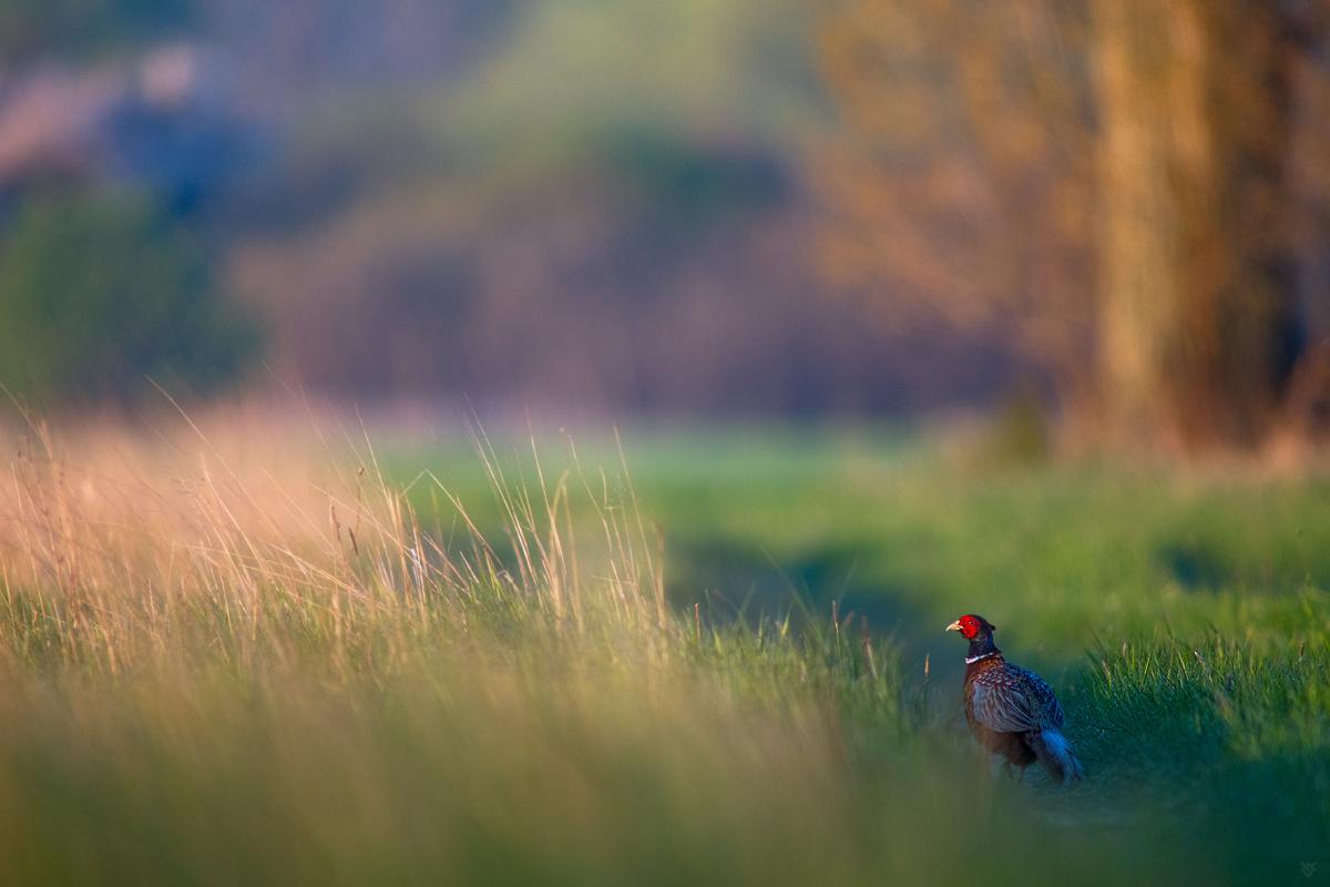 Ranny ptaszek by Wwojciech Grzanka