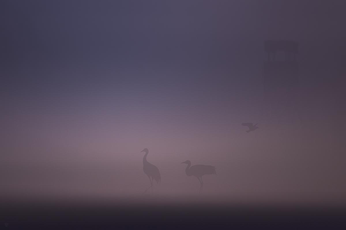 Ptaki we mgle by Wojciech Grzanka