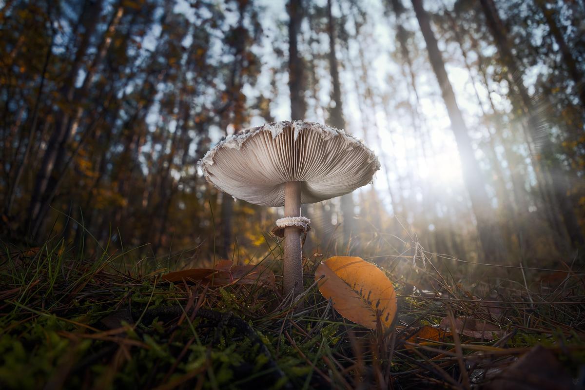 Pod grzybkiem by Wojciech Grzanka