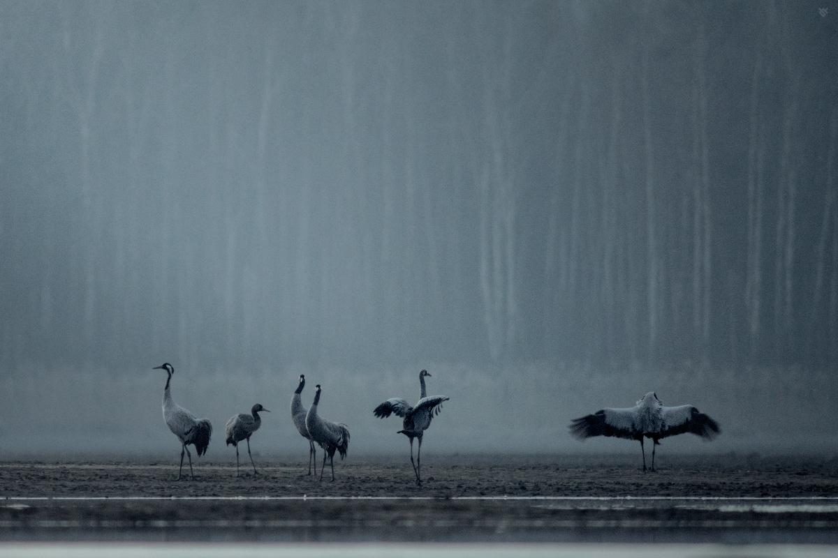 Noclegowisko żurawi by Wojciech Grzanka