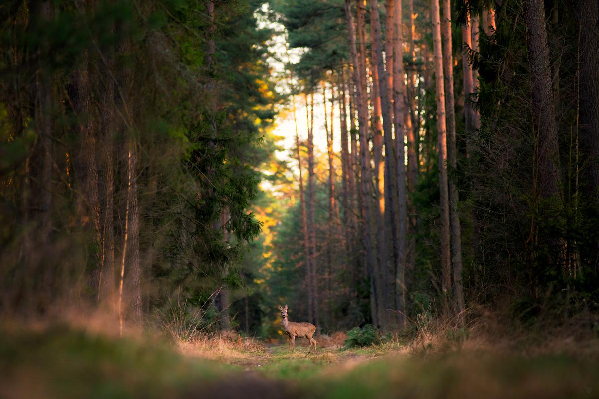 Las wokół nas by Wojciech Grzanka